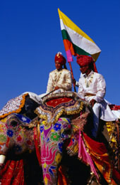 L-11-1173-decorated_and_painted_elephants_posing_for_judges_at_annual_elephant_festival__jaipur__india-Z000U4VZ.jpg