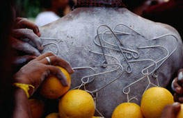 L-17-1757-oranges_hanging_from_piercings_on_a_devotees_back__thaipusam_festival__singapore__singapore-Z00D3Q23.jpg