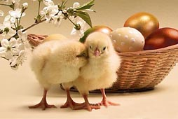00-chicks_happy_easter.jpg