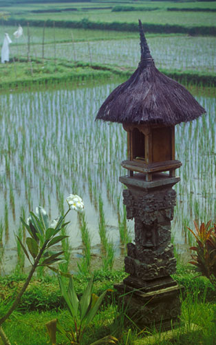 bali-temple-rice-field.jpg